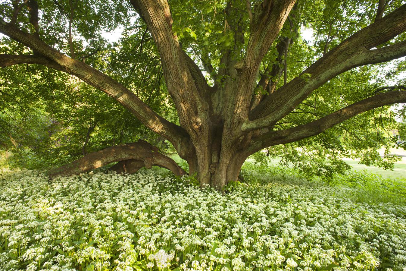 Landschaft im Licht / Bäume